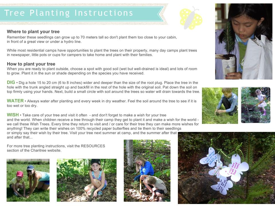 Treeplantinginstructions-1